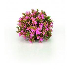 biOrb Blumenball pink