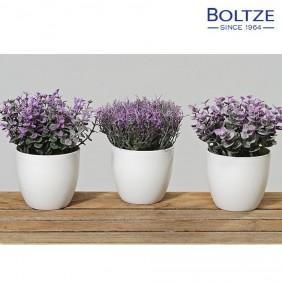 Boltze Topfpflanzen Höhe 15 cm
