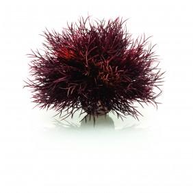 biOrb Seelilie dunkelrot