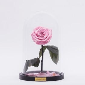 Monde des Fleurs LA BELLE Infinity Rose in Rosa