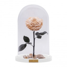 Monde des Fleurs La Bête Infinity Rose in Creme