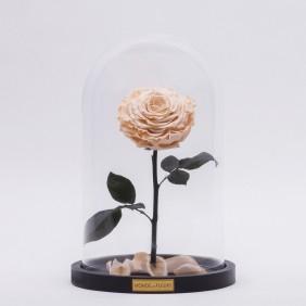 Monde des Fleurs LA BELLE Infinity Rose in Creme