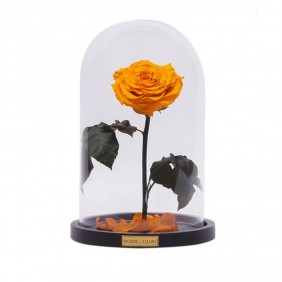 Monde des Fleurs LA BELLE Infinity Rose in Dunkel Gelb