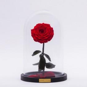 Monde des Fleurs La Bête Infinity Rose in Rot