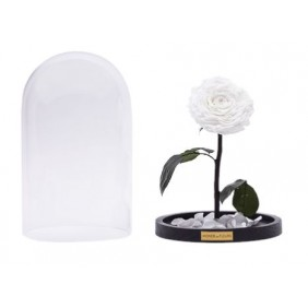 Monde des Fleurs LA BELLE Infinity Rose in Weiß