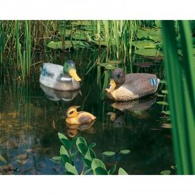 Heissner schwimmende Enten-Familie 665_666_667