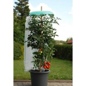 KHW Starter Set Tomatenhut