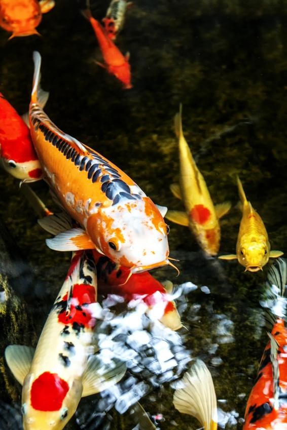 Der richtige teich f r kleine und f r gro e g rten for Einheimische fische gartenteich