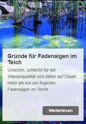 Gründe für Fadenalgen im Teich | www.oase.teichbau.de