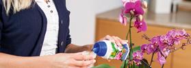 Blumenpflege