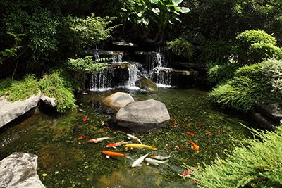 Teich selbst bauen teichbau anleitung f r jedermann for Teich mit fischen