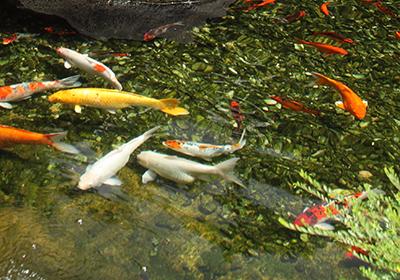 kontrollieren Sie die Gesundheit der Fische