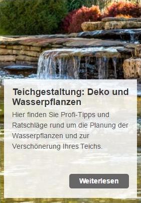 Ihr Teich steht und sie möchten ihn verschönern? Klasse Tipps! | www.oase-teichbau.de