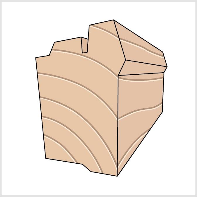 Roto Holz Querschnitt